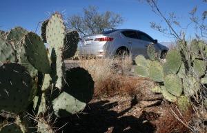 cactus_ilx