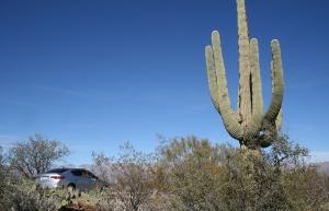 ilx_saguaro_away