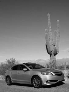 ilx_saguaro_bw