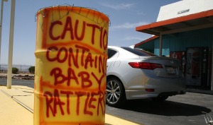 contains_baby_rattlers_route_66_acura_ilx