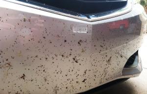 ilx_bumper_bugs