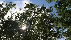 tree_overhead
