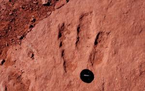 dino_tracks