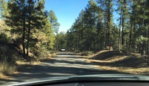 lynx_lake_road