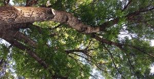 tree_view