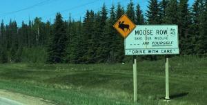 moose_row