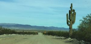 wayside_road